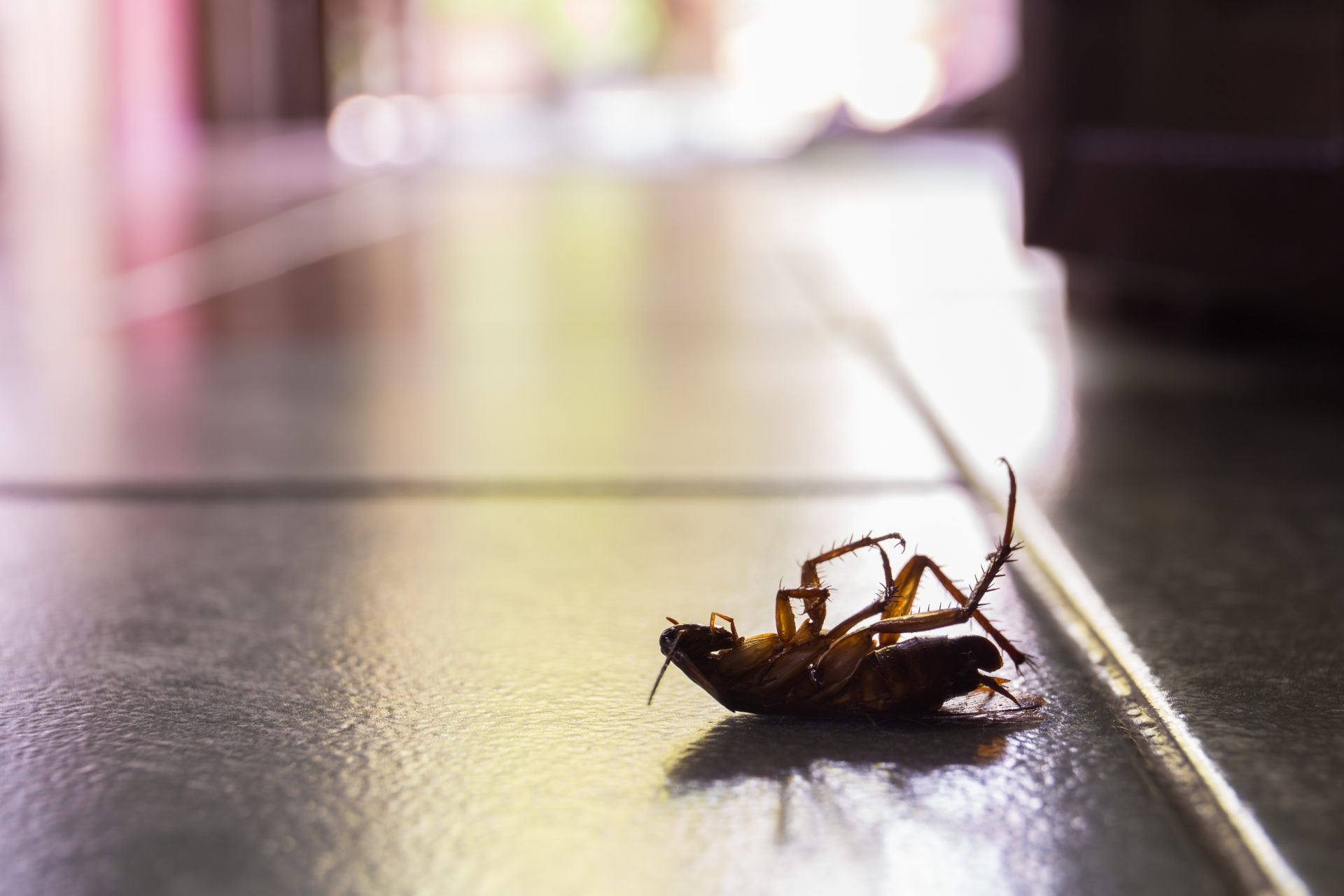 Cockroach Control, Pest Control in Chigwell Row, Chigwell, IG7. Call Now 020 8166 9746