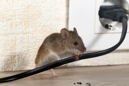 Pest Control in Chigwell Row, Chigwell, IG7. Call Now! 020 8166 9746