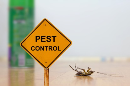 Pest Contol in Chigwell Row, Chigwell, IG7. Call Now 020 8166 9746