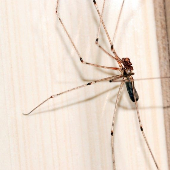 Spiders, Pest Control in Chigwell Row, Chigwell, IG7. Call Now! 020 8166 9746